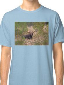Moose in rut - Algonquin Park, Canada Classic T-Shirt