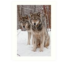 Timber Wolf Pair Art Print