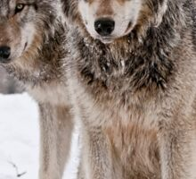 Timber Wolf Pair Sticker