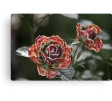 Furry Roses Canvas Print