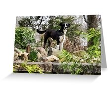 Terrier Standing Guard Greeting Card