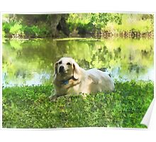 Yellow Lab by Lake Poster