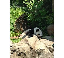 Lazy days at the national zoo Photographic Print