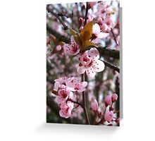 Spring Plum Blossoms Greeting Card