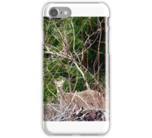 White Tailed Deer through Brush iPhone Case/Skin