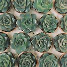 Succulent Collection by Cassia Beck