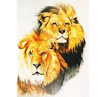 Pair of Kings Photographic Print