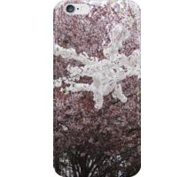 Cherry blossoms framed by other blooming trees in Northern Virginia iPhone Case/Skin
