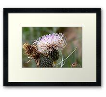 Dune Thistle  Framed Print