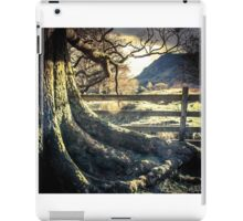 Old Tree iPad Case/Skin