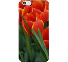 Tulips iPhone Case/Skin