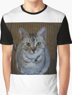 Beautiful Kitten Graphic T-Shirt