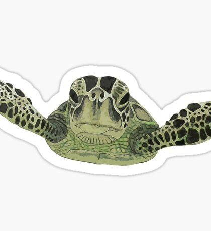 Green sea turtle  Sticker