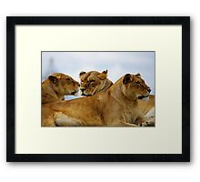 Three Amigos!!! Framed Print