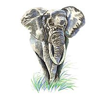 Watercolor Elephant Animal Nature Art Photographic Print