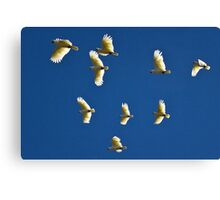 Fly over Canvas Print