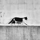 Stray Cat Strut by Ursula Rodgers