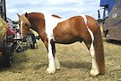 Chestnut Paint .. Gypsy Vanner by LoneAngel