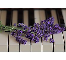 Lavenders Blue Photographic Print