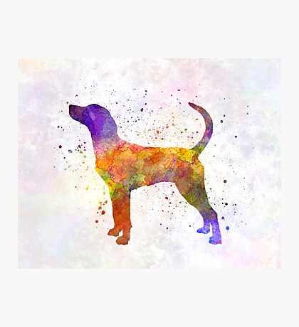 English Foxhound in watercolor Photographic Print