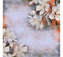 Flower retro background Blossoming of cherry.  Photographic Print