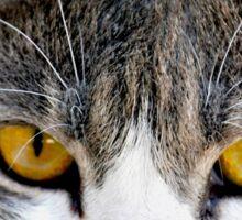 Cat eyes Sticker