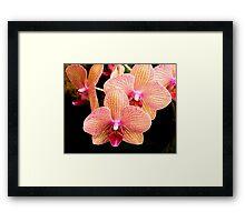 Orchid Show Favorite Framed Print