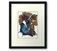 FF - Buttefly-1 Framed Print