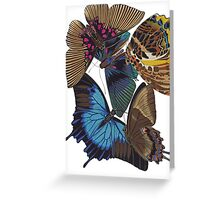 FF - Buttefly-1 Greeting Card