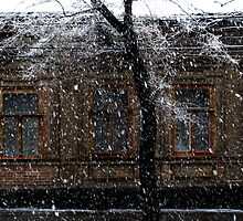 snowfall. march 2 by Nikolay Semyonov
