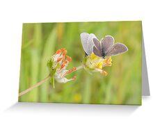Small Blue Butterflies Greeting Card