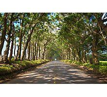 Eucalyptus Tree Tunnel - Kauai Hawaii Photographic Print