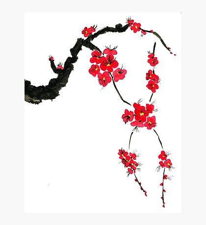 Red blossoming flowers of cherry Photographic Print