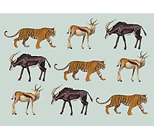 Tiger and Antelopes Photographic Print