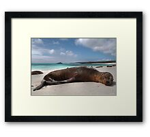 Galapagos Innocence - Limited Edition 1/10 Framed Print