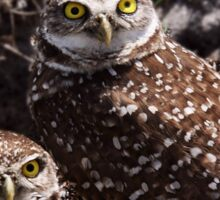 OWL PAIR Sticker
