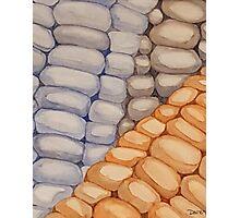 Corn Photographic Print