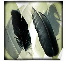 Two Raven Feathers Poster
