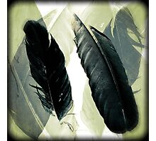 Two Raven Feathers Photographic Print