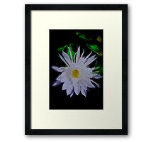 Queen of the Night Cereus Orchid Cactus Framed Print