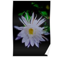 Queen of the Night Cereus Orchid Cactus Poster