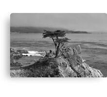 Lone Cypress Tree #2 Canvas Print