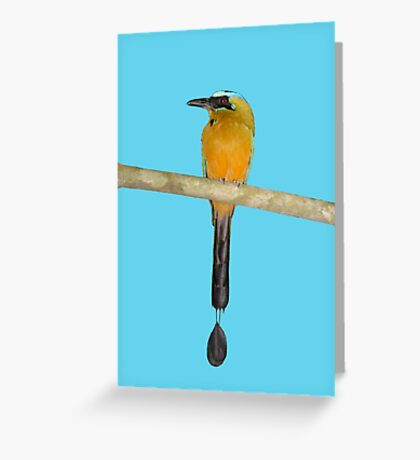 Blue-Crowned Motmot Greeting Card