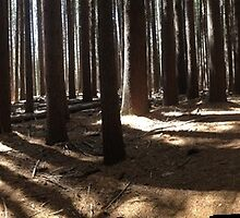 Pin Pines Forest Floor by whiterider