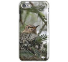 Baby Hummingbird in the Nest iPhone Case/Skin