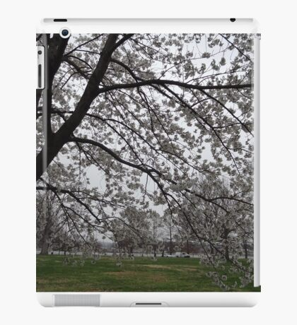 Cherry Blossoms in the Tidal Basin - Washington, DC 2016 iPad Case/Skin