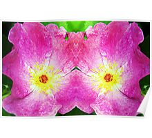 Pink Rose Bloom Mirrored  Poster