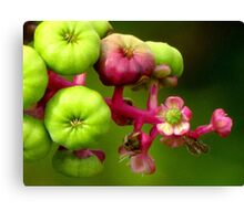 Poke Flower Changing To Berries Canvas Print