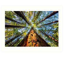 Redwood Heaven Reach Art Print