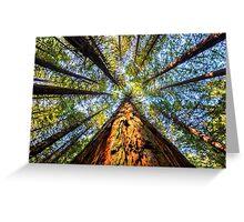 Redwood Heaven Reach Greeting Card